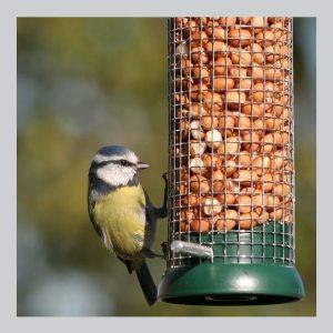 Bird Seed & Feeders